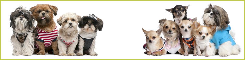 Walkies Pet Supplies Banner3